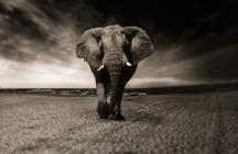 elephant-2870777_640